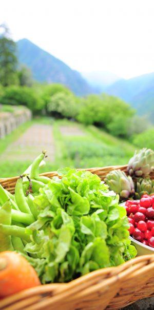Qu'est-ce que l'agriculture biologique
