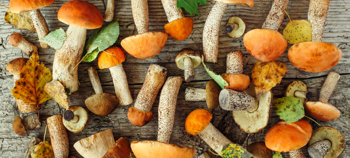 Les champignons, quels sont leurs atouts pour la santé
