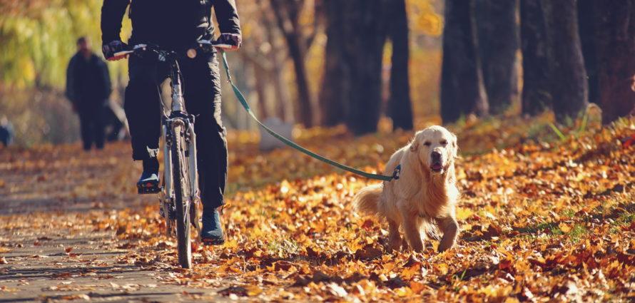 Homme en train de faire du vélo avec son chien