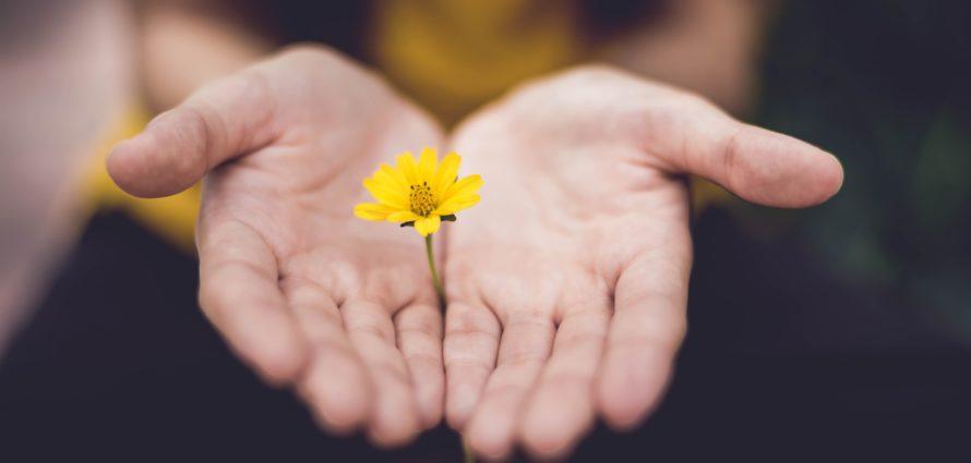 Fleur dans des mains